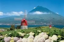 Açores, baleines et volcans atlantiques