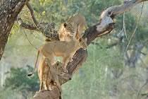 Le parc Kruger autrement...
