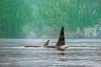 Baleines, fjords et totems du Pacifique