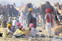 Rajasthan, festival de Pushkar