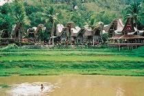 Sulawesi, trek en Pays toraja