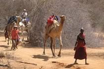 Expédition du Pays rendille au lac Turkana