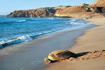 De Mascate aux sables du Rub Al Khali