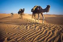 Initiation au désert