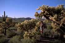 Désert, cactus et Grand Canyon